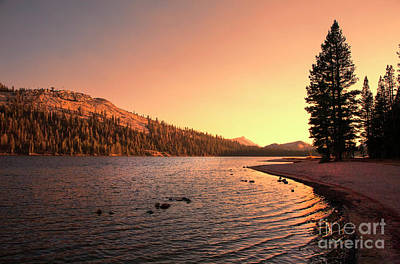 Photograph - Yosemite National Park Sunset  by Chuck Kuhn