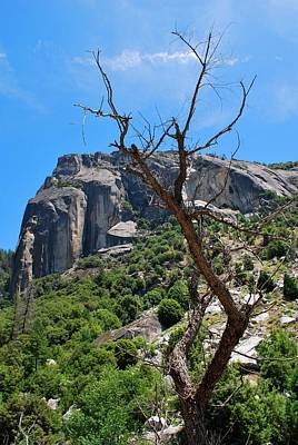 Photograph - Yosemite Rock Formation Dead Tree Vertical by Matt Harang
