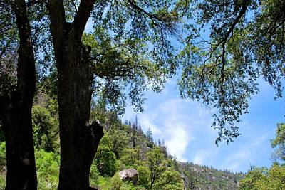 Photograph - Yosemite Sky View Through Trees by Matt Harang
