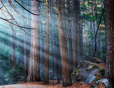 Art Print featuring the photograph Yosemite Sunbeams II by Rand