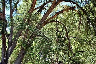 Photograph - Yosemite Tree Overhang by Matt Harang