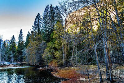 Wall Art - Photograph - Yosemite Trees And Branches by Roslyn Wilkins