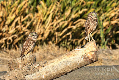 Photograph - You Teeter While I Totter by Carol Groenen