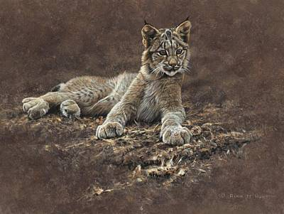 Painting - Young Bobcat by Alan M Hunt by Alan M Hunt