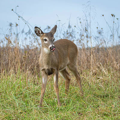 Wall Art - Photograph - Young Buck by Phil Thach