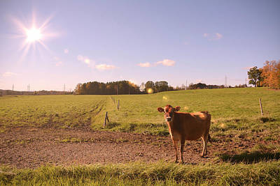 Photograph - Young Cow In The Fields by Angie Tirado