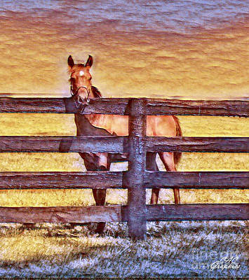 Young Kentucky Thoroughbred Art Print