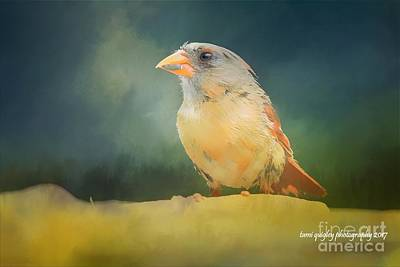 Photograph - Young Lady Cardinal by Tami Quigley
