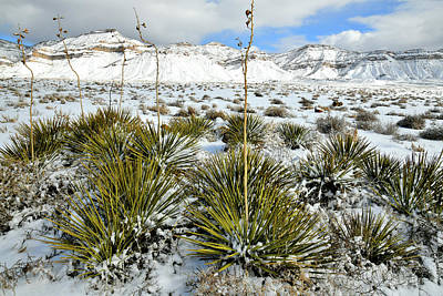 Photograph - Yucca And The Book Cliffs In Snow by Ray Mathis