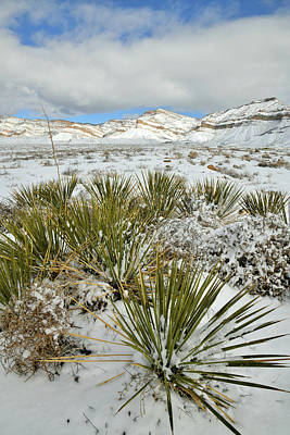 Photograph - Yucca Beneath Snow Covered Book Cliffs by Ray Mathis