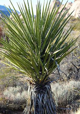 Photograph - Yucca by Sagittarius Viking