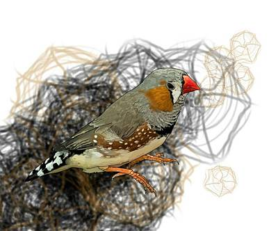 Child Wall Art - Digital Art - Z Is For Zebra Finch by Joan Stratton