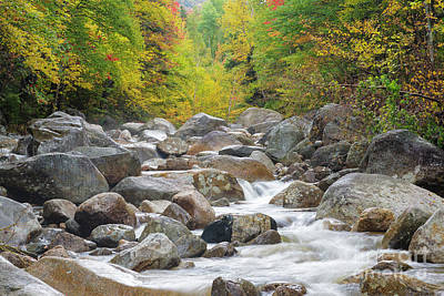 Photograph - Zealand River - White Mountains, New Hampshire by Erin Paul Donovan