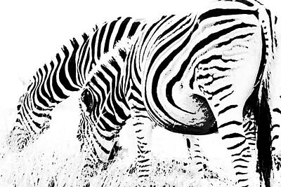 Photograph - Zebra Abstract by Images Unlimited