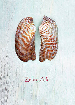 Photograph - Zebra Ark by Kathi Mirto