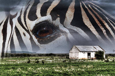 Photograph - Zebra Art by Images Unlimited