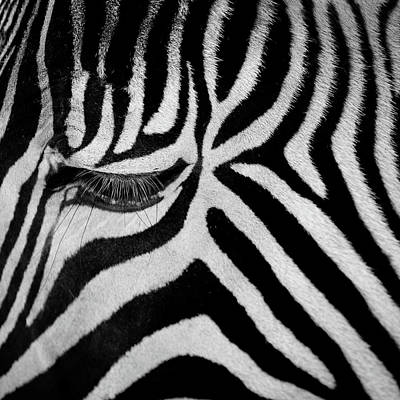 Photograph - Zebra by Billy Currie Photography