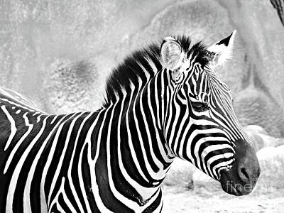 Louis Armstrong - Zebra II Black and White by Gary Richards
