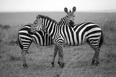 Photograph - Zebra In Masai Mara by Mlorenzphotography