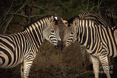 Abstract Airplane Art - Zebra Kiss by Jamie Pham