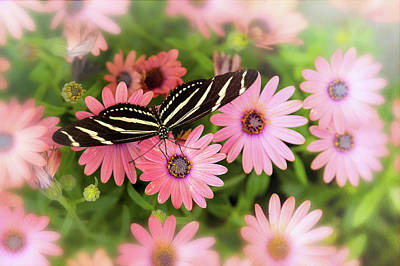 Photograph - Zebra Longwing Butterfly On Pink  by Saija Lehtonen