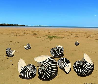 Girl Wall Art - Mixed Media - Zebra Nautilus Shells On The Beach  by Joan Stratton
