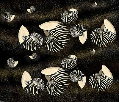 Zebra Pattern Nautilus Shells6 Art Print