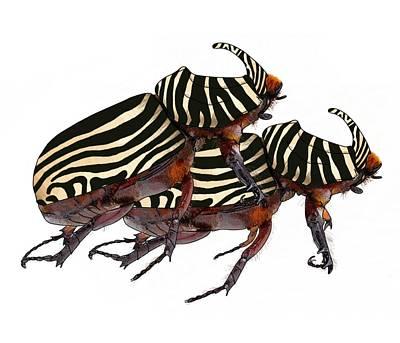 Zebra Pattern Rhinoceros Beetle 2 Art Print