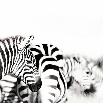 Photograph - Zebras Black And White by Jane Rix