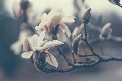 Photograph - Zen Magnolia Blossom Boho Style by Jenny Rainbow
