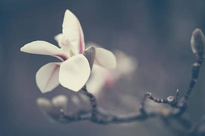 Photograph - Zen Magnolia Flower Boho Style by Jenny Rainbow