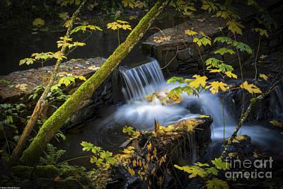 Wilderness Camping - Zen by Mitch Shindelbower