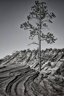 Photograph - Zion Tree by Phil Cardamone