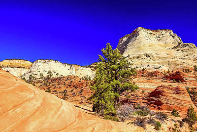 Photograph - Zion View by Dawn Richards