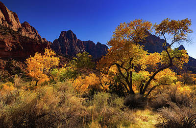 Photograph - Zions Beauty by Tassanee Angiolillo