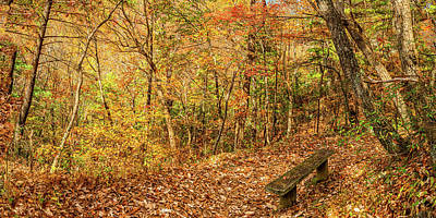 Photograph - 2to1 Pano A Restful Spot in the Woods by Gestalt Imagery