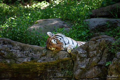 Farmhouse Royalty Free Images - Afternoon Nap Royalty-Free Image by Megan Miller