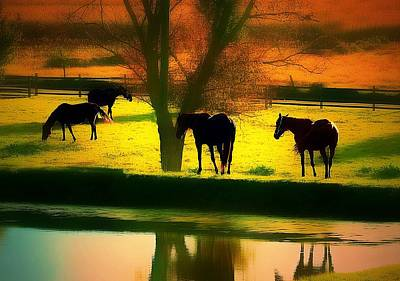 Bear Photography Rights Managed Images - All The Tired Horses In The Sun... Royalty-Free Image by Jeff Watts