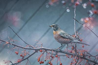 Photograph - American Robin in the Rain by Abhi Muduganti