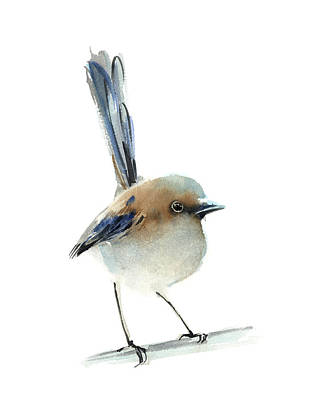 School Teaching - Australian blue tailed wren by Sophia Rodionov