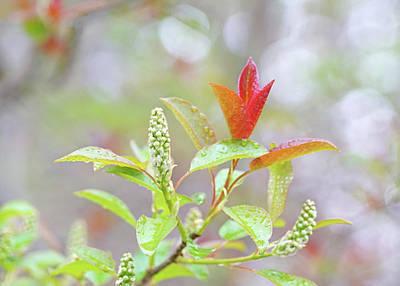Travel - Black Cherry Tree Twig by Kathi Mirto