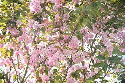 Kitchen Mark Rogan - Blossom by Johnny Griffin