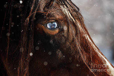 Photograph - Blue Eyes by Shelley Paulson