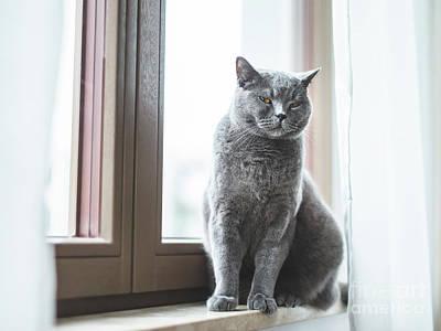 Garden Fruits - British cat sitting on window sill. by Michal Bednarek