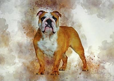 Animals Drawings - Bulldog Art by Ian Mitchell