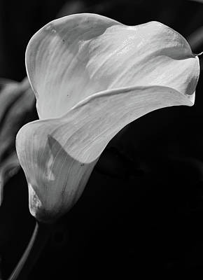 Photograph - Calla Lily by Scott Thomas Images