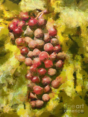 Amy Weiss - Cardinal grapes by Dragica Micki Fortuna