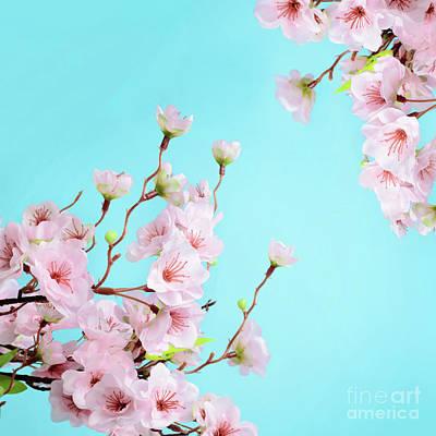 Animal Watercolors Juan Bosco - Cherry Blossom Flowers by Katarzyna Krawiec