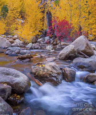 Sean - Colorful Autumn by Mitch Shindelbower