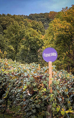 Travel Rights Managed Images - Concord Royalty-Free Image by AYJ Adventures